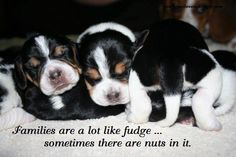 LOL....and I proudly claim my place as the nut!!!
