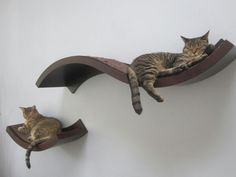Welcoming Curves - Furniture for Cats