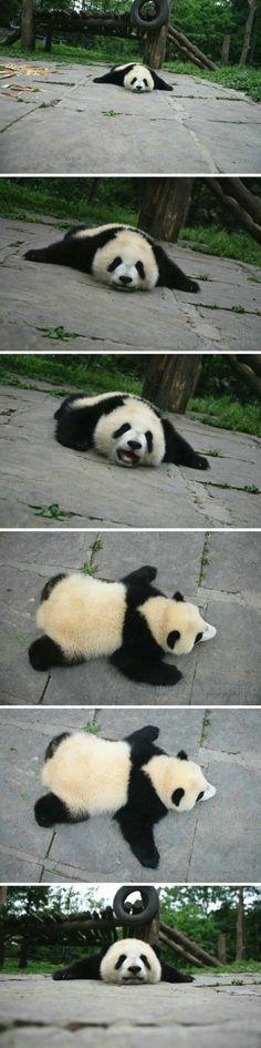 Lovely Tarepanda~ cause my Cody loves pandas.