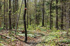 Vert tendre Crédit photo : L. Galarneau