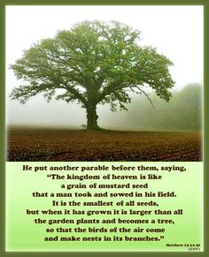 """He put another parable before them, saying, """"The kingdom of heaven is like a grain of mustard seed that a man took and sowed in his field. It is the smallest of all seeds, but when it has grown it is larger than all the garden plants and becomes a tree, so that the birds of the air come and make nests in its branches."""" Matthew 13:31-32 Parables of Jesus: Mustard Seed-About the Kingdom of Heaven"""
