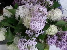 Lilacs from our yard for a Mothers Day bouquet.
