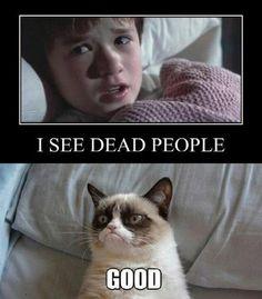 Love this guy grumpy cat!