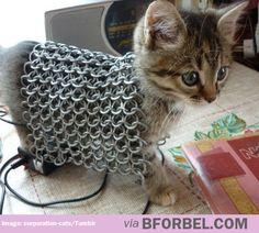 My kitten is battle ready