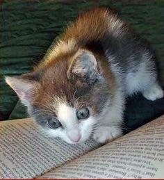 Sneaking a peek at 50 shades  of catnip
