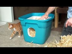 How to Make a Feral Cat Shelter - YouTube