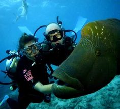 Scuba-diving Photo:  This Photo was uploaded by KnoxFox. Find other Scuba-diving pictures and photos or upload your own with Photobucket free image and v...