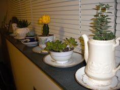 Teacup cacti! So cute!