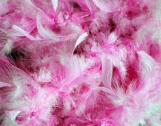 Pink Feathers Background