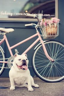 pink beach cruiser and french bulldog... the dog is cute but i want the pink cruiser :)