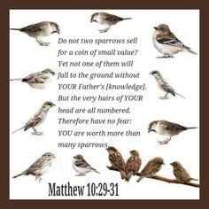 Matthew 10;20-31