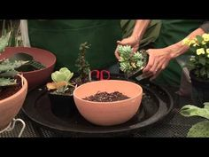 Debra Lee Baldwin - How to Plant a Succulent Container Garden - YouTube