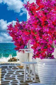 Beautiful Places To Travel, Beautiful Beaches, Beautiful World, Beautiful Gardens, Paros Greece, Santorini Greece, Greece Art, Mykonos, Naoussa Paros