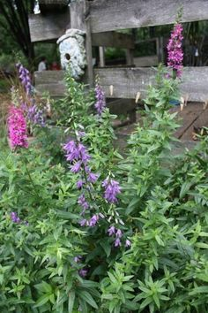Butterfly Bush Has Brown Leaf Spots: Fixes For Buddleia Leaves With Spots - Brown spots on butterfly bush leaves are a common symptom in Buddleia. Buddleia leaf spot isn't anything to worry about if you know what to look for. Read this article to learn more.