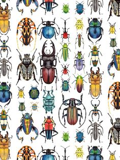 """'Beetle Collection' Poster by Kelly King - Aquarell und Tusche Von 2016 Reihe """"Das Leben und Träume von Shadow Puppets ' Art And Illustration, Illustrations, Beetle Drawing, Bugs Drawing, Posca Art, Bug Art, Beautiful Bugs, Insect Art, Bugs And Insects"""
