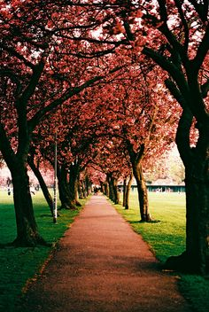 Spring in Edinburgh, Scotland #nature #beauty #Scotland