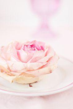 Beautiful Rose And a Dream ♥ Красива роза и една мечта | 79 Ideas