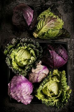 PURPLE AND GREEN CABBAGE