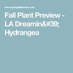 Fall Plant Preview - LA Dreamin' Hydrangea