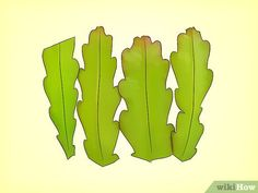 How to Grow Epiphyllum Cactus. The epiphyllum cactus is a native Brazilian plant that grows in the sides and forks of trees in the canopies of the rain forests. It yields beautiful flowers that typically open in the evening and bloom for a. Flower Bookey, Flower Film, Flower Pots, Cactus Planta, Cactus Y Suculentas, Cacti And Succulents, Planting Succulents, How To Grow Cactus, Easter Cactus