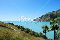 Seascape, Cable Bay, Nelson, New Zealand Royalty Free Stock Photo Nelson New Zealand, New Zealand Landscape, Tree Images, Cabbage, Royalty Free Stock Photos, News, Photography, Photograph, Fotografie