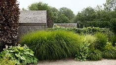 Instead of the usual prim suspects—boxwood, privet, holly—the designer of this Rhode Island garden composed the hedge with tall, breezy grasses. A seven-foot-tall maiden grass (Miscanthus sinensis 'Gracillimus'), along with several smaller stands of dwarf fountain grass (Pennisetum alopecuroides 'Hameln'), creates a sense of enclosure that has a fluid, almost musical effect.