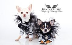 Bogie and Kimba wearing their Barker's Bazaar outfits by Anthony Rubio