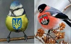 All our birds Ukrainian Recipes, Ukrainian Art, Grand Prince, Trident, Photography 101, My Heritage, All Art, Russia, Birds