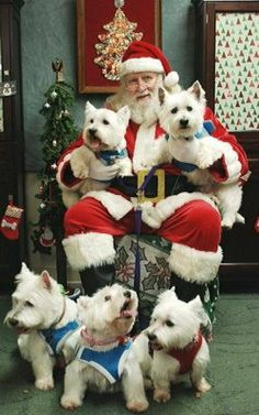 Westie on the right is thinking. Westies gone to visit Santa Christmas Animals, Christmas Dog, Merry Christmas, Father Christmas, Christmas 2017, White Christmas, Christmas Cards, Westies, Westie Dog