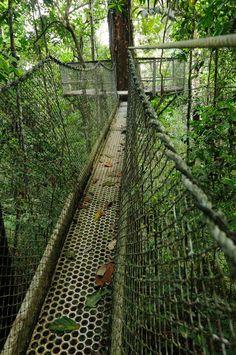 Iwokrama, Guyana, Canopy Walkway I went here in 2009!! I did the canopy walk too. Beautiful untamed jungle
