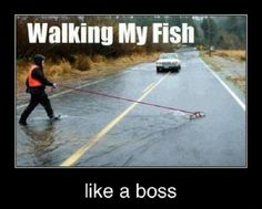 Walking my Fish Like a Boss