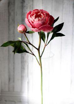 Amazing Flowers, Fresh Flowers, Beautiful Flowers, Flower Images, Flower Art, Sugar Flowers, Paper Flowers, Flower Aesthetic, Flowers Nature