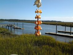 Volve Conch Shells hanging from Murex Ramosus Shell by ConniesChimes on Etsy Conch Shells, Sea Shells, Seashell Wind Chimes, Trending Outfits, Outdoor Decor, Vintage, Etsy, Seashells, Shells