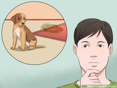 How to House Train a Puppy (with Pictures) - wikiHow