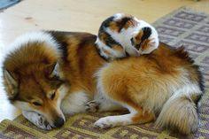 20 น้องแมวที่คิดว่าหมาคือหมอน