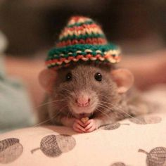 Hamster in a hat Cute Baby Animals, Animals And Pets, Funny Animals, Cute Small Animals, Cute Rats, Cute Hamsters, Rats Mignon, Maus Illustration, Baby Hamster