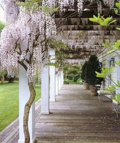 Anna Wintour's wisteria Love The pergola is understated by nature, an empty frame to accent or support. It doesn't look like much on its own, but a garden without a pergola is like a r Patio Trellis, Wisteria Pergola, Pergola Patio, Pergola Ideas, Trellis Ideas, White Pergola, Pergola Designs, Patio Ideas, Wisteria Trellis