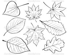 Royalty Free Clipart Image of a Set of Leaves Leaf Coloring, Colouring Pages, Coloring Books, Contour Drawing, Leaf Drawing, Free Clipart Images, Royalty Free Clipart, Classroom Art Projects, Fall Images