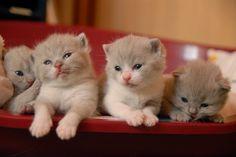 kittys<3 <3 - the-kitteh-club Photo