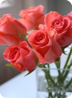 Cute Roses #roses, #flowers, https://facebook.com/apps/application.php?id=106186096099420