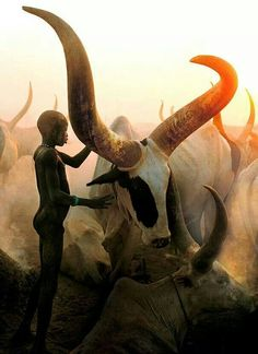 Dinka people...who herd cattle in south africa