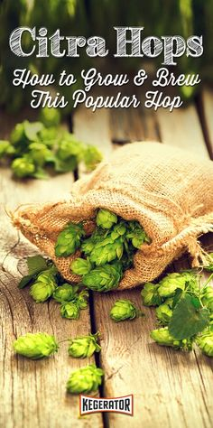 How to Grow & Brew Citra Hops