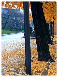TRENTO - Italy - Yellow Autumn 2014