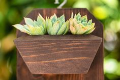 I love the way succulent cuttings look in this wooden planter. Wooden Containers, Succulents In Containers, Wooden Planters, Hanging Planters, Succulent Cuttings, Turquoise Painting, Hanging Necklaces, Dish Garden, Succulent Arrangements