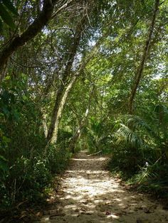 Where the jungle meets the beach... trail to Guiones beach in Nosara, Costa Rica