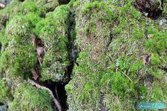focus arbre balade en nature