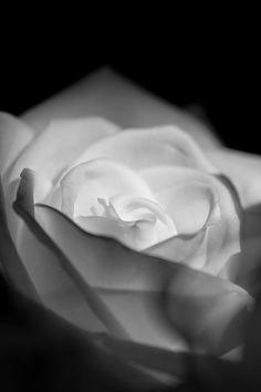 Flowers - Black and White Photography (Schwarz-Weiß-Fotografie) - © Tim Münnig