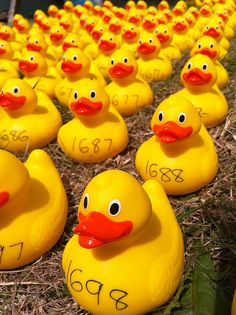 Olney Duck Race     Stock imprintable rubber ducks for your business or organization