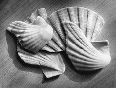 Broken shells. Gelatin silver print. Copyright Andrew sanderson. www.andrewsanderson.com Black and White photography, Analogue, Film.