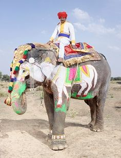 Beautiful photos of painted elephants by French photographer Charles Freger . The annual Elephant Festiv. Jaipur, Elephant Colour, Elephant Art, Charles Freger, Animals And Pets, Cute Animals, Elephants Photos, Indian Elephant, Asian History